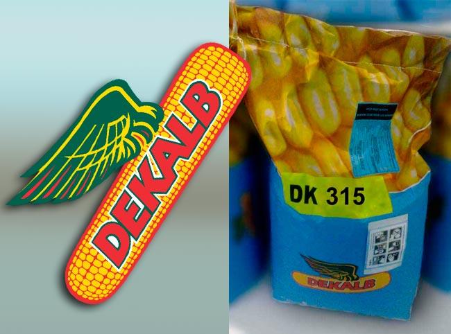Семена кукурузы Декалб (Монсанто) ДК 315