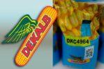 Семена кукурузы Декалб (Монсанто) ДКС 4964
