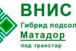 Гибрид подсолнечника Матадор