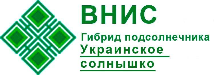 Гибрид подсолнечника Украинское солнышко