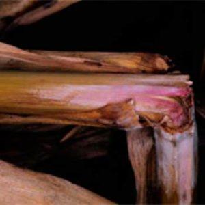 Стеблевой фузариоз кукурузы фото