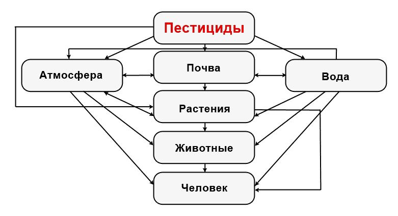 Схема циркуляции пестицидов в