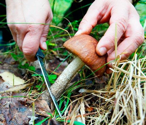 О грибах