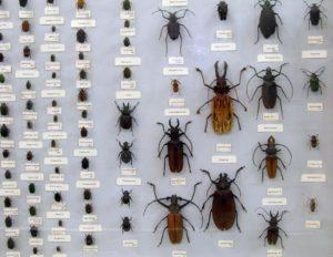 Энтомология (от др.-греч. ἔντομον — насекомое + λόγος — слово, учение)