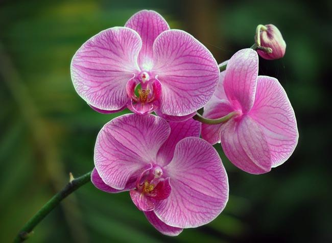 орхидеи цветок фото