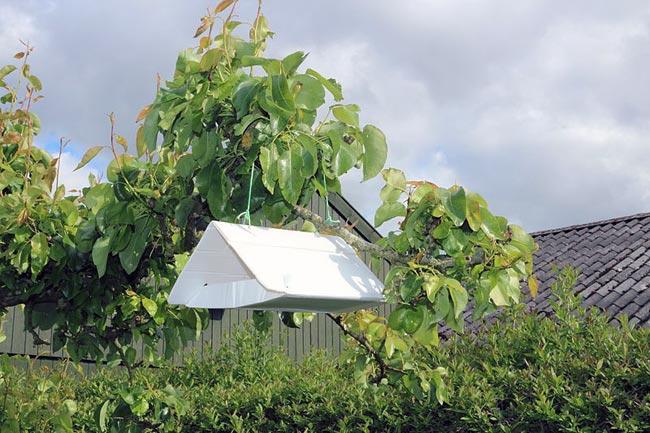 Феромонная ловушка для яблонной плодожорки