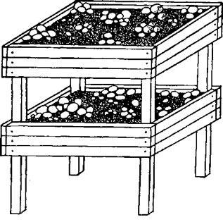 Закладка субстрата для шампиньонов