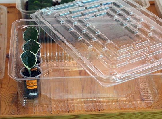 Создание повышенной влажности для черенков фиалки