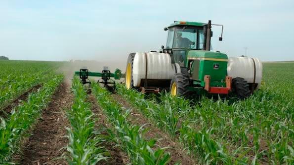 Удобрение кукурузы