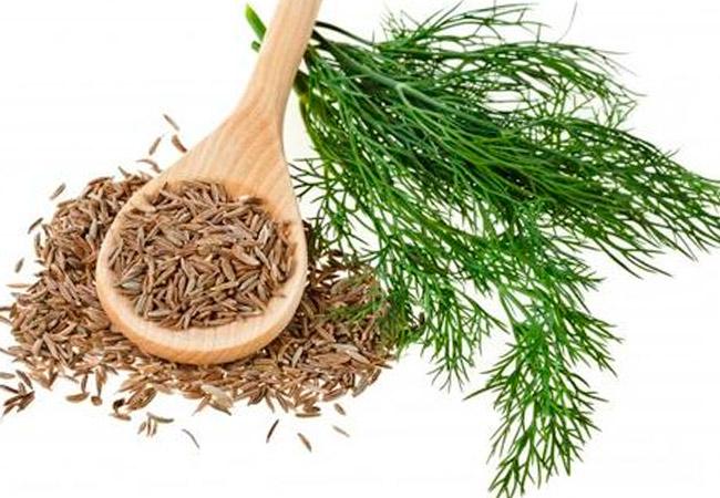 Лечебные свойства эфирного масла укропа