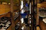 Как оборудовать подвал для выращивания грибов