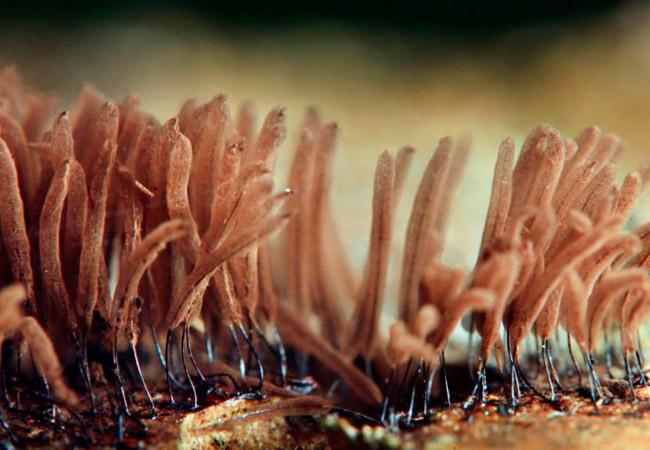 Мицелий в домашних условиях