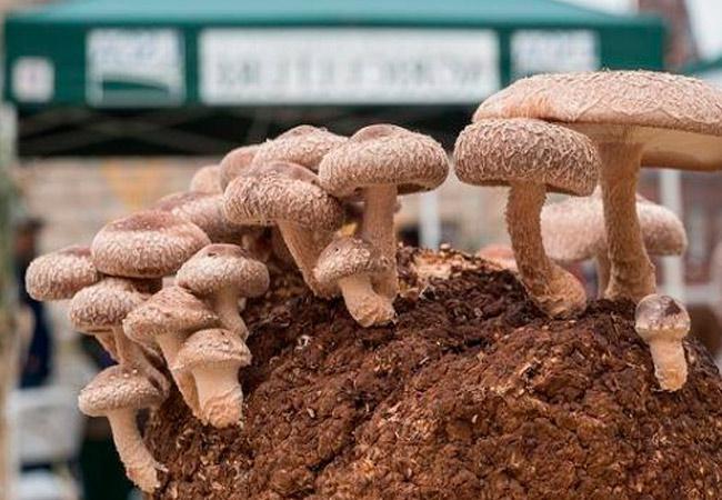 Какие грибы можно вырастить искусственно