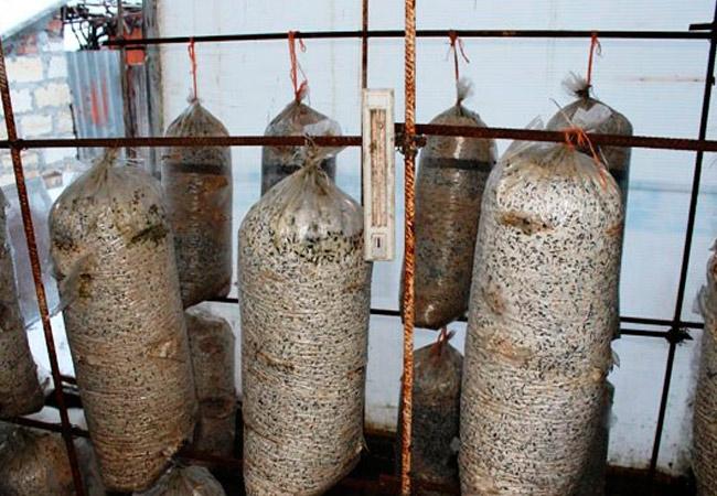 Выращивание в полиэтиленовых мешках