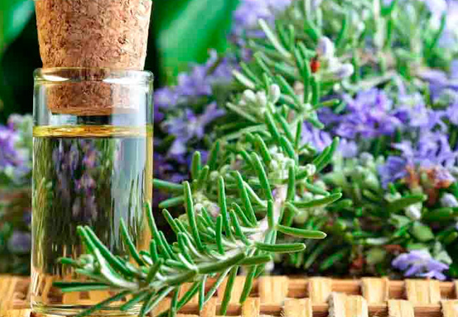 Эфирное масло розмарина лечебные свойства