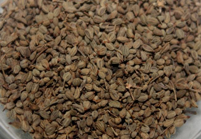 Петрушка корневая: выращивание из семян