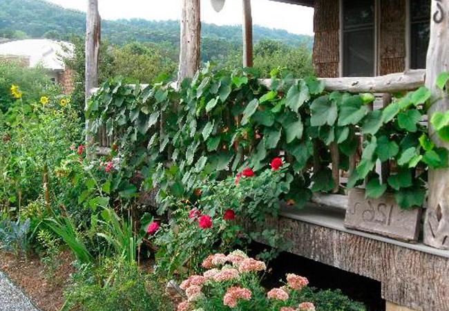 Какие растения нельзя сажать рядом с виноградом