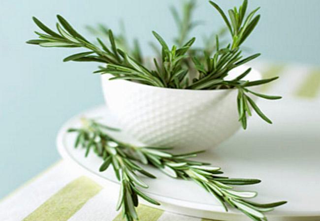 Трава розмарин лечебные свойства и противопоказания для организма