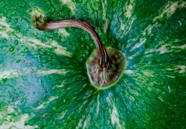 Правильный выбор арбуза: что надо знать