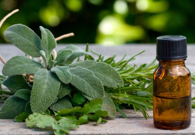 Применение эфирного масла шалфея