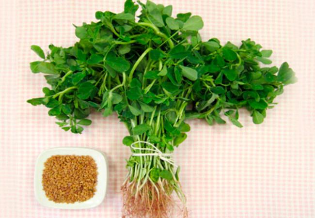 Лечебные свойства растения пажитник
