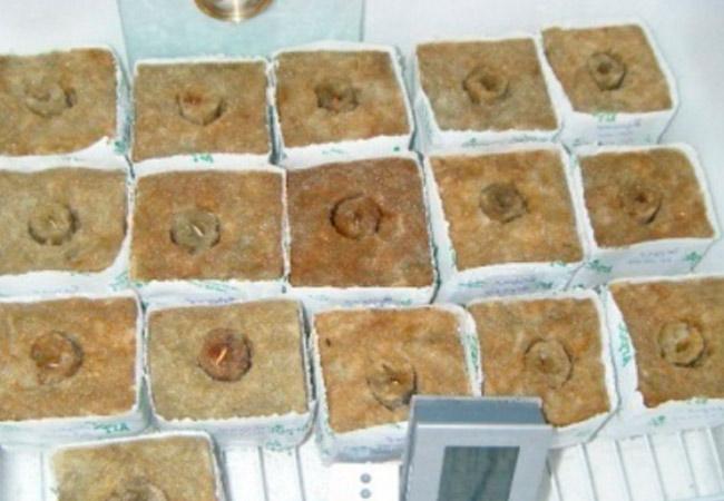 Минераловатные плиты для выращивания рассады