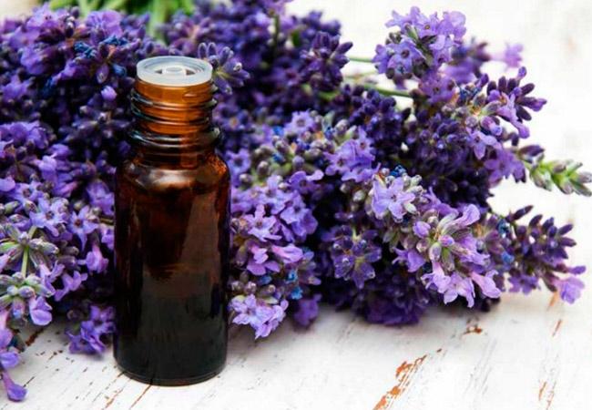 Спектр свойств и лечебное применение масла лаванды