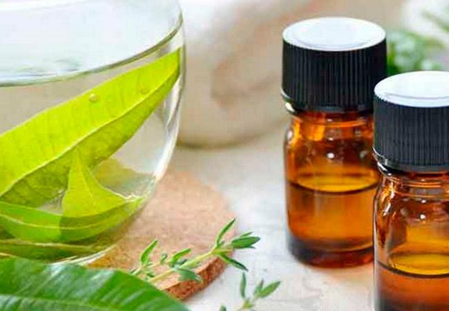 Лечебное применение эфирного масла вербены, практические рецепты