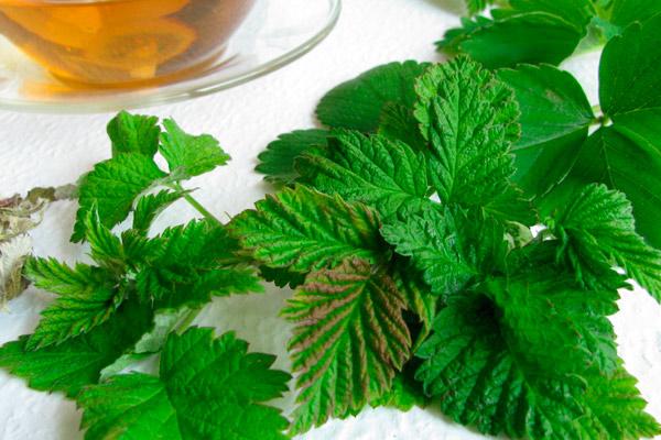 Рецепты лечебных средств из листьев малины