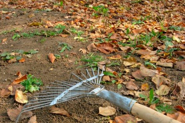 Как собрать листья для перегноя