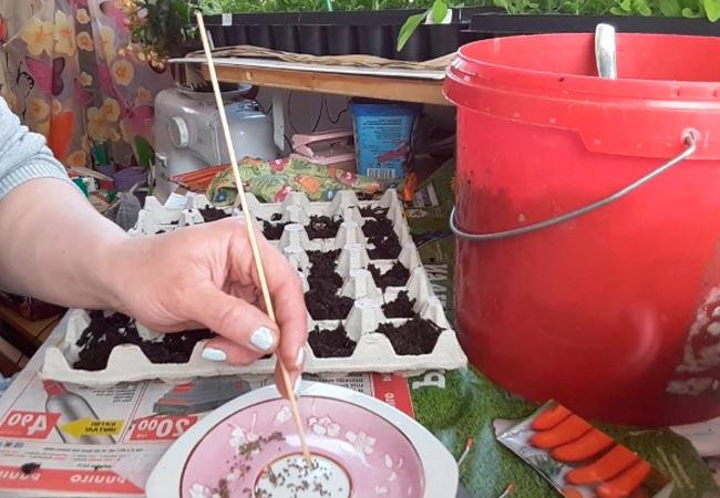 Как производить посадку моркови в яичные ячейки