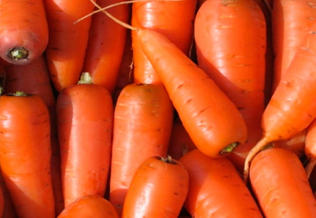 Семяна моркови, высеваемых под зиму