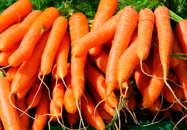 Лучшие семена моркови, обзор сортов