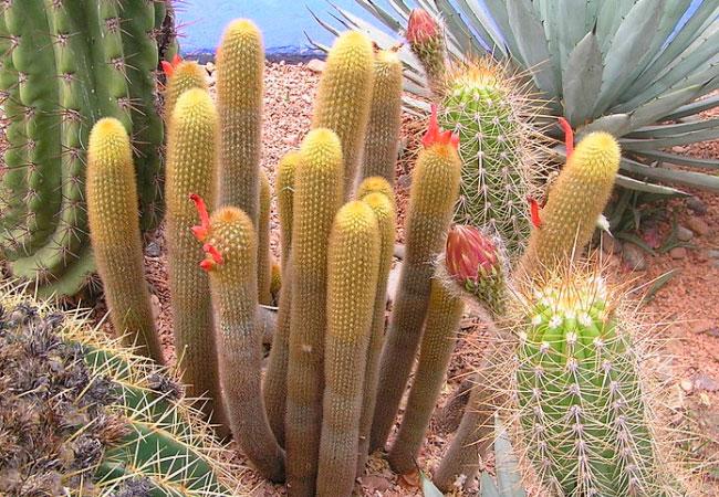 Болезни и вредители кактуса