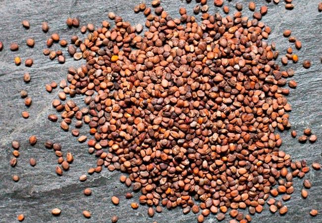 Как замочить семена редиски перед посевом
