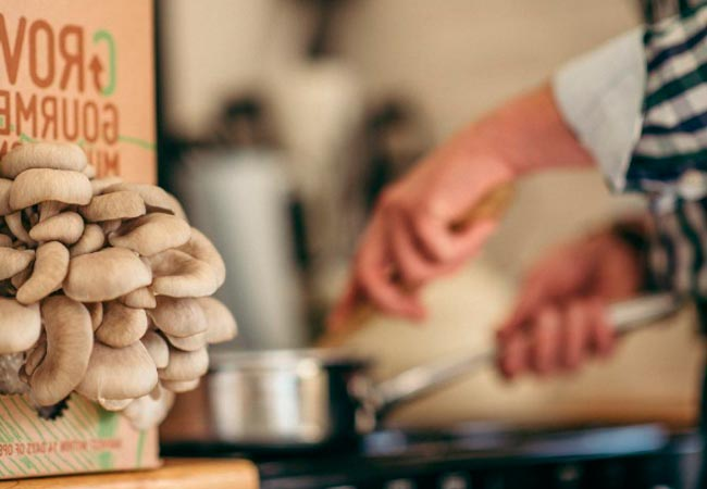 Вешенки с картофелем на сковороде