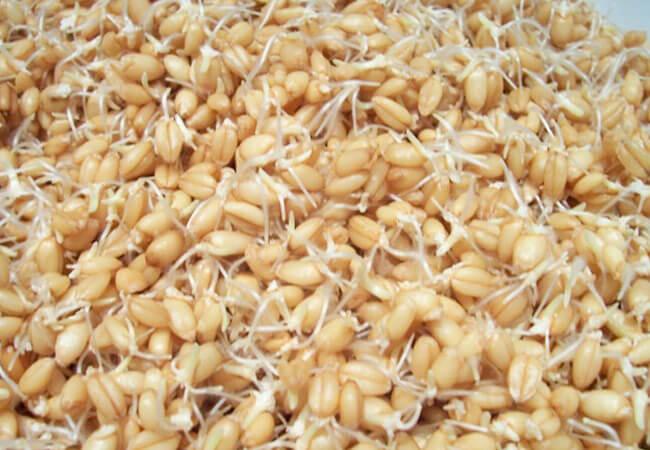Рецепт самогона из кукурузы без дрожжей