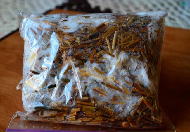 Как выбрать качественный мицелий