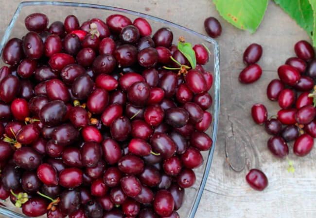 Пошаговый рецепт вкусного вина из кизила