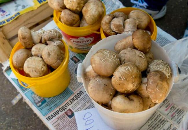 Санитарные правила сбора и реализации грибов на рынках