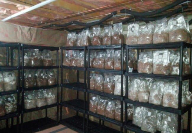 Как избавиться от плесени при выращивании грибов