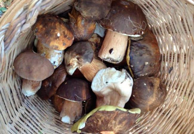 Сколько времени варить белые грибы