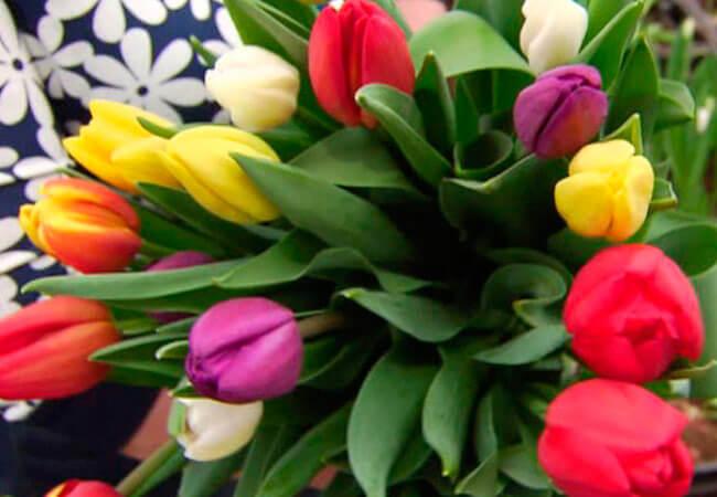 Как хранить срез тюльпана в воде