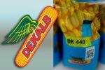 Семена кукурузы Декалб (Монсанто) ДК 440Семена кукурузы Декалб (Монсанто) ДК 440