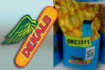 Семена кукурузы Декалб (Монсанто) ДКС 3511