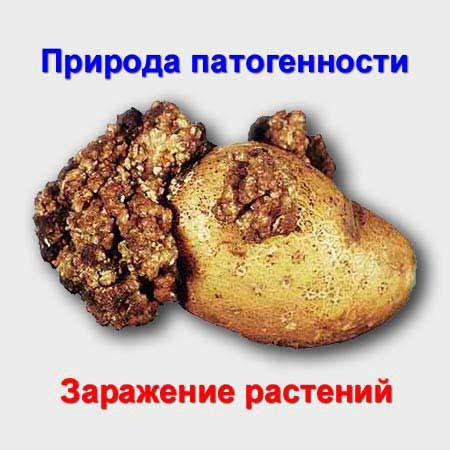 Природа патогенности