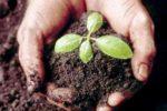 Влияние пестицидов на почвенную микрофлору