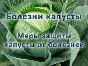 Болезни капусты