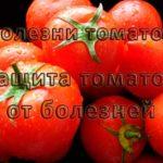 Болезни томатов