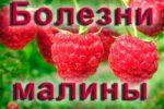 Болезни малины
